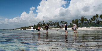 Guided Reef Walk